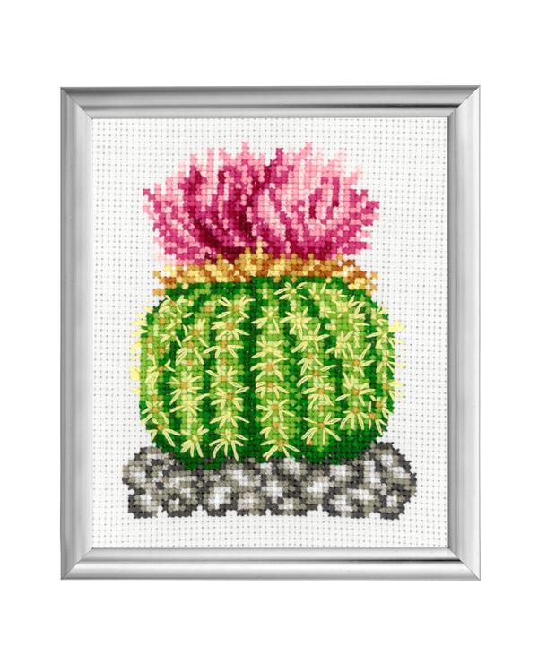 Bild Kaktus mit rosa Blumen