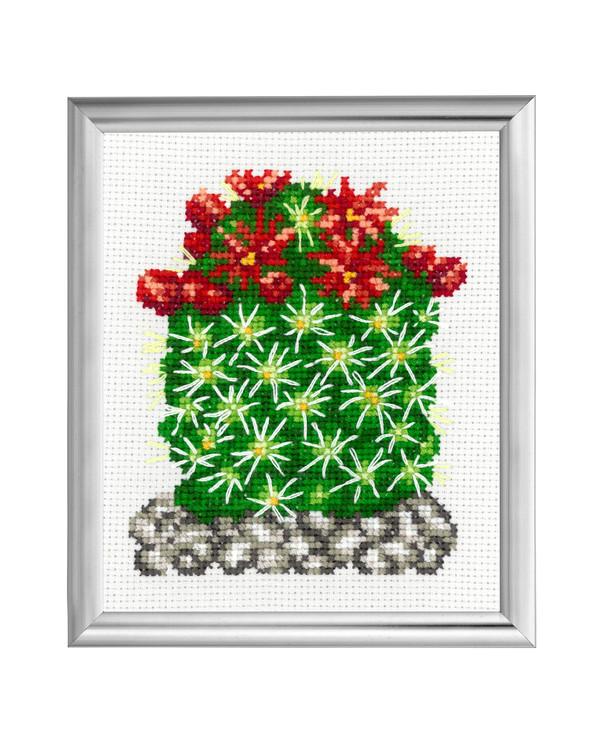 Bilde Kaktus Røde blomster
