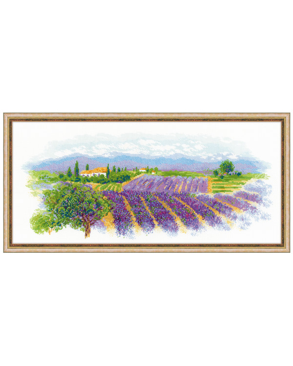 Bilde Lavendel i Provence