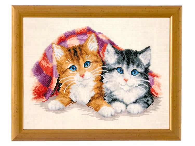 Billede Søde kattekillinger