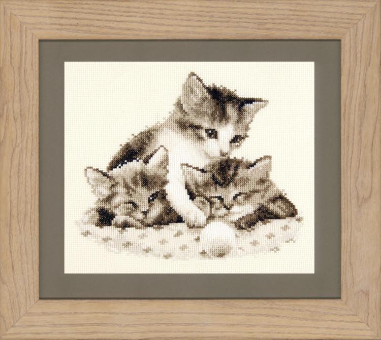 Bild Müde Kätzchen