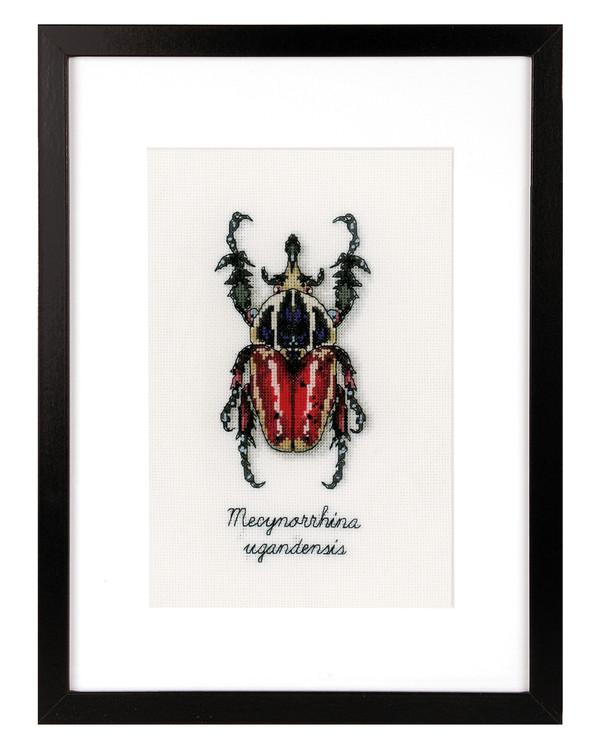 Taulu Punainen kovakuoriainen