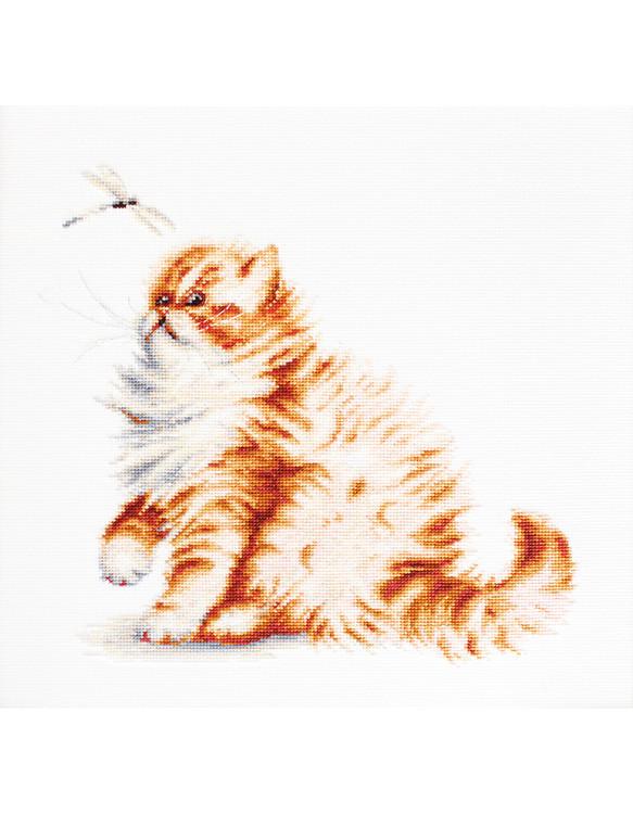 Bilde Katt med øyenstikker