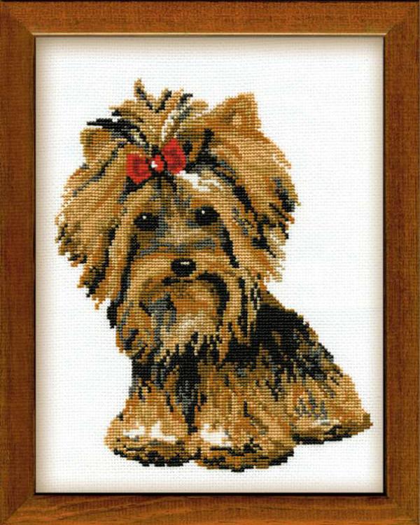 Bilde Yorkshire Terrier